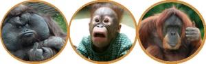 ¿A que son monos?