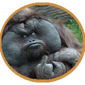 Peor que la mierda de mono